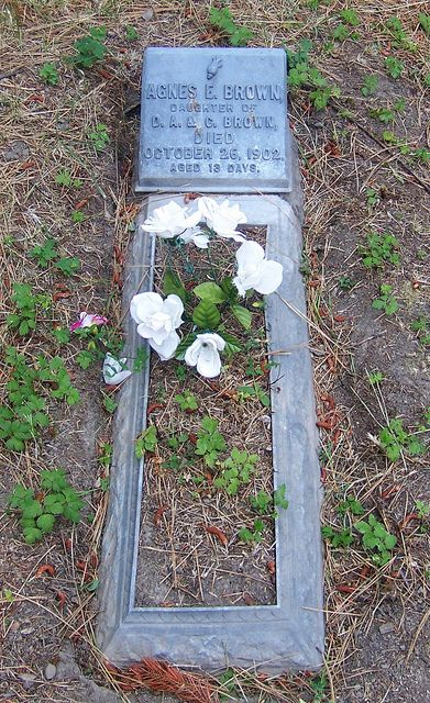 Agnes E. Brown Pet cemetery, Moving to seattle, Cemetery