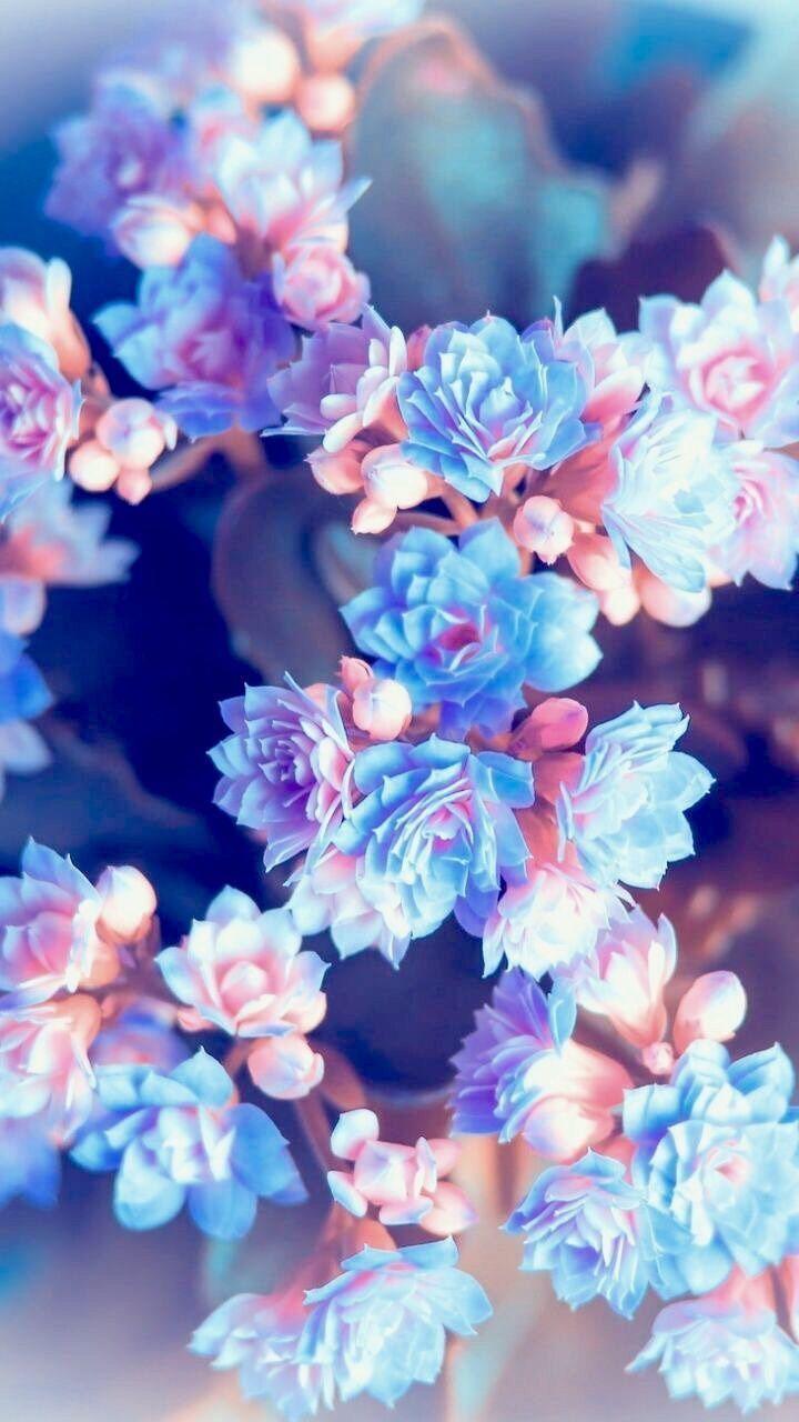 Iphonewallpaper Vintage Hintergrundbildiphone Tapete Iphonewallpaper Vintage Hintergrundbildiphone Blue Flower Wallpaper Floral Wallpaper Spring Wallpaper