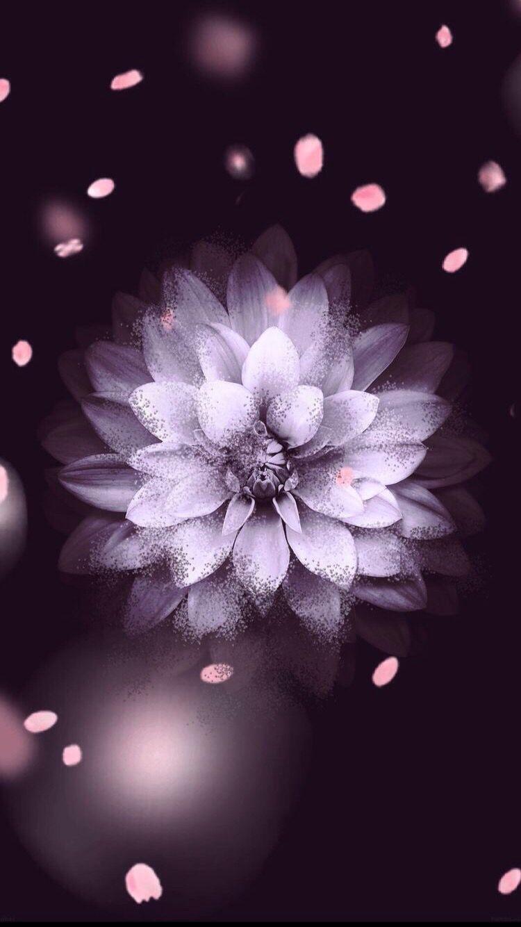 картинки на аву для айфона цветы напомним