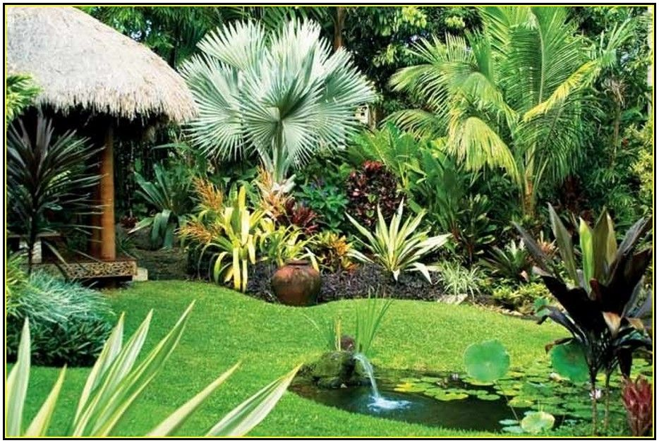 collection in backyard tropical landscaping ideas backyard tropical landscape ideas home design