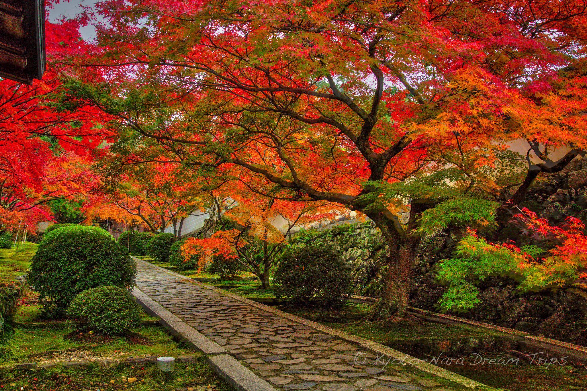 https://flic.kr/p/PhR9WP | Shūon-an Ikkyū-ji, Autumn Buzz in Kyotanabe, Japan. | The approach to the Shūon-an Ikkyū-ji (酬恩庵一休寺) temple, in Kyotanabe, Kyoto. It feels like walking under an umbrella of red crimson maple leafs.