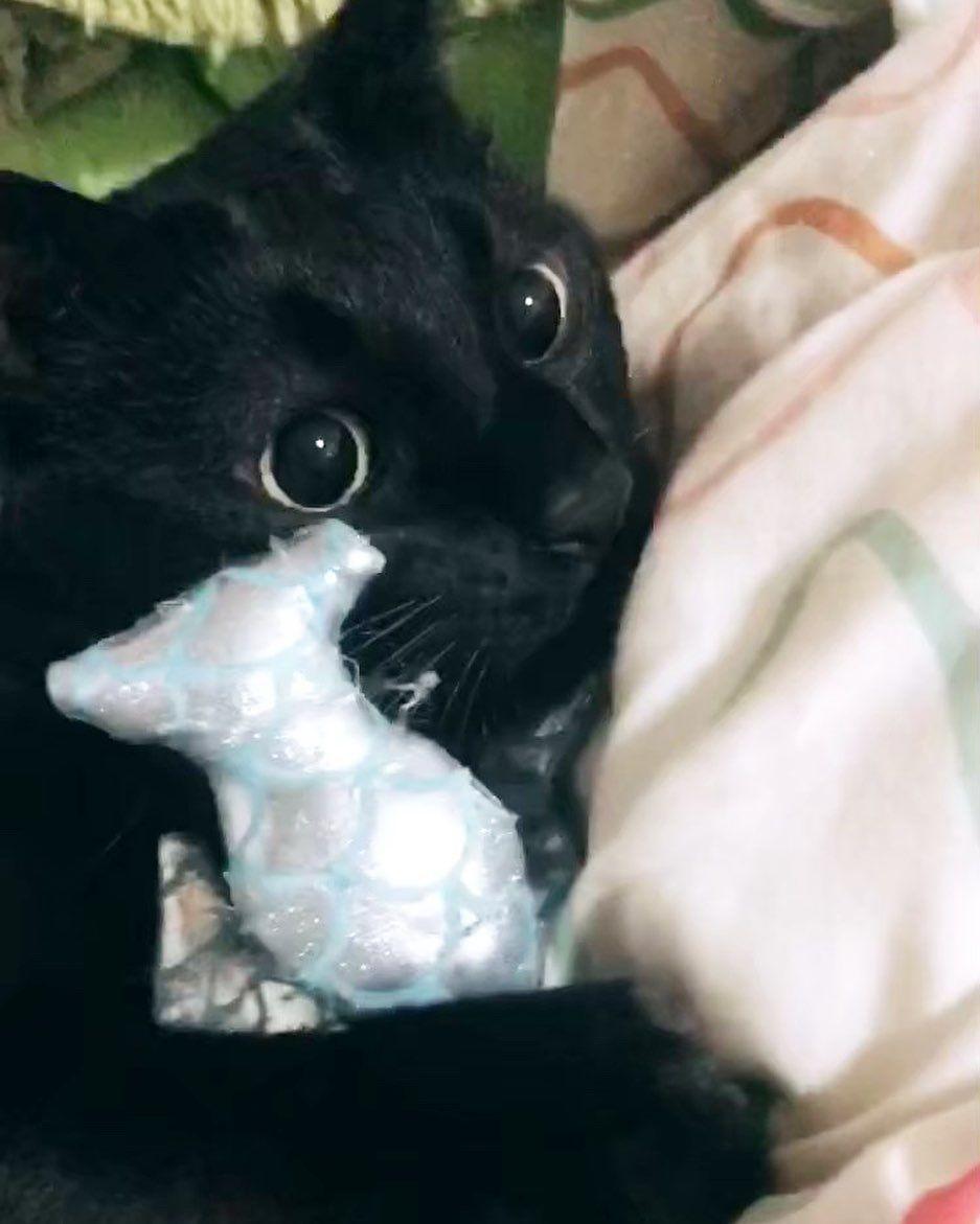 . 🦈🦈🦈 ・ ・ #catstagram #catlover #cat #catlife #cute #love #💗 #ねこ #ねこすたぐらむ #ねこと暮らす #ねこのいる生活 #ねこすきさんと繋がりたい #ねこ部 #ねこ好き #猫 #猫のいる暮らし #猫好きさんと繋がりたい #猫好き #猫部 #動物好きな人と繋がりたい #動物 #😽❤️