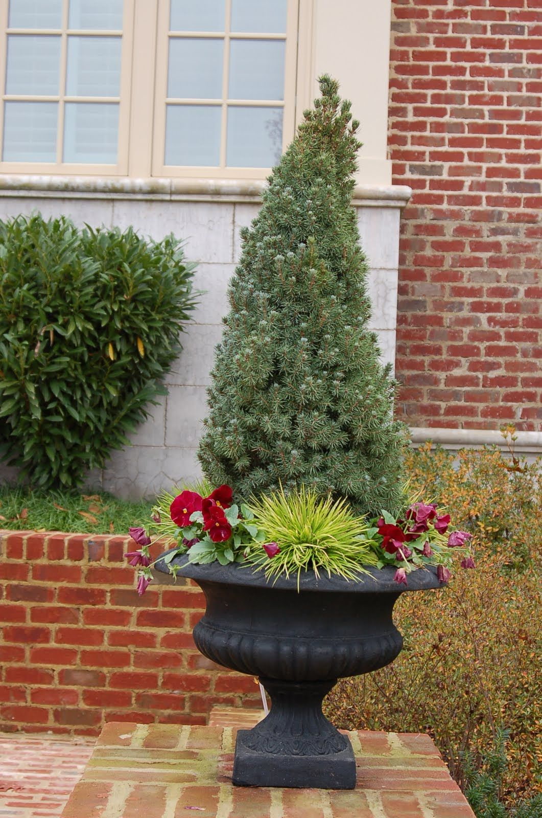 dwarf alberta spruce in container front portch. Black Bedroom Furniture Sets. Home Design Ideas