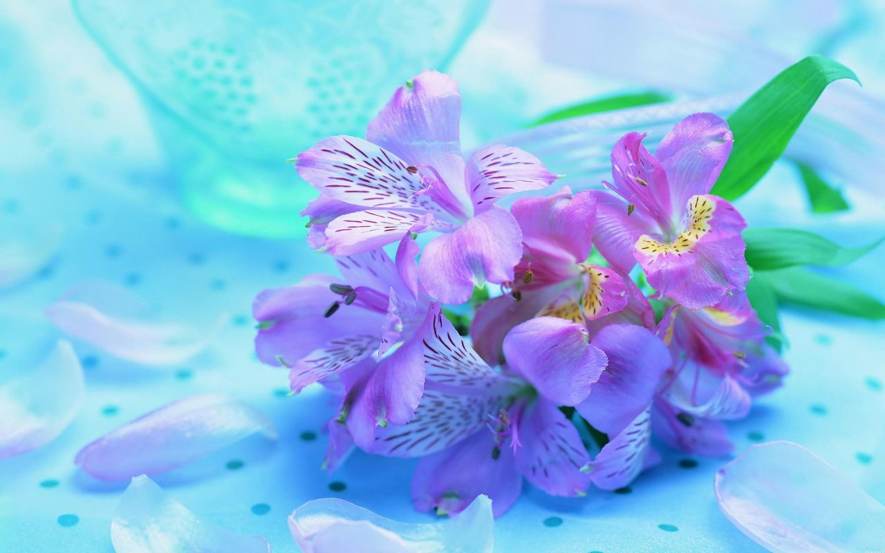 Purple And Pink Roses Wallpaper Gorgeous Fresh Flowers With Nice Light Color Wallpapers