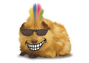 Guinea Pig - - Yahoo Image Search Results