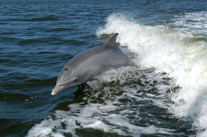 1001 Ideen Zum Thema Schone Delfine Bilder Dolphin Tours