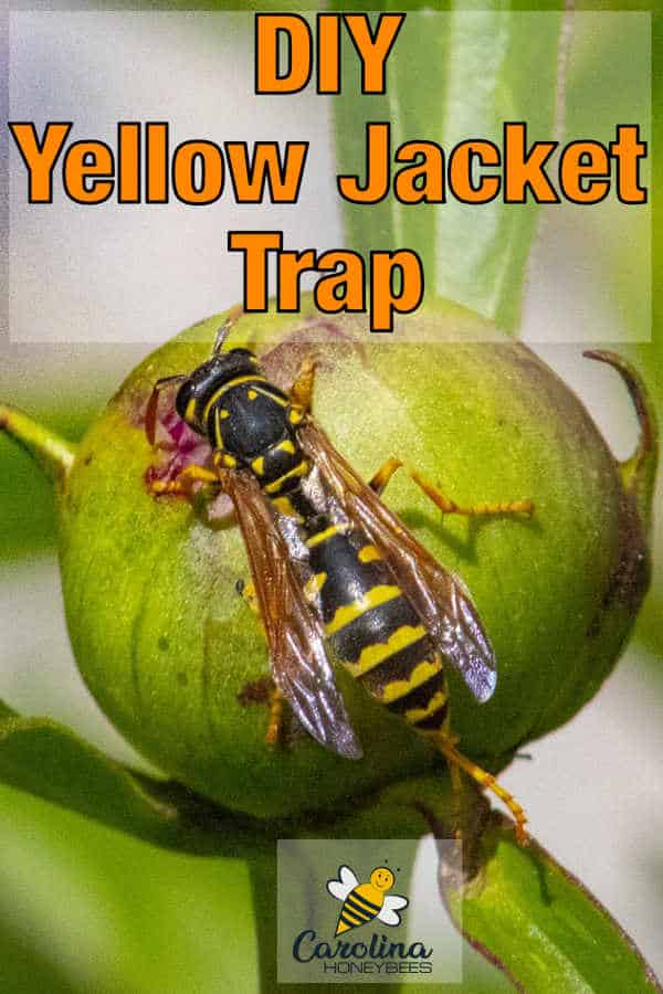 119136debe6effa02b390bceda3d3cda - How To Get Rid Of Yellow Jackets In House Wall