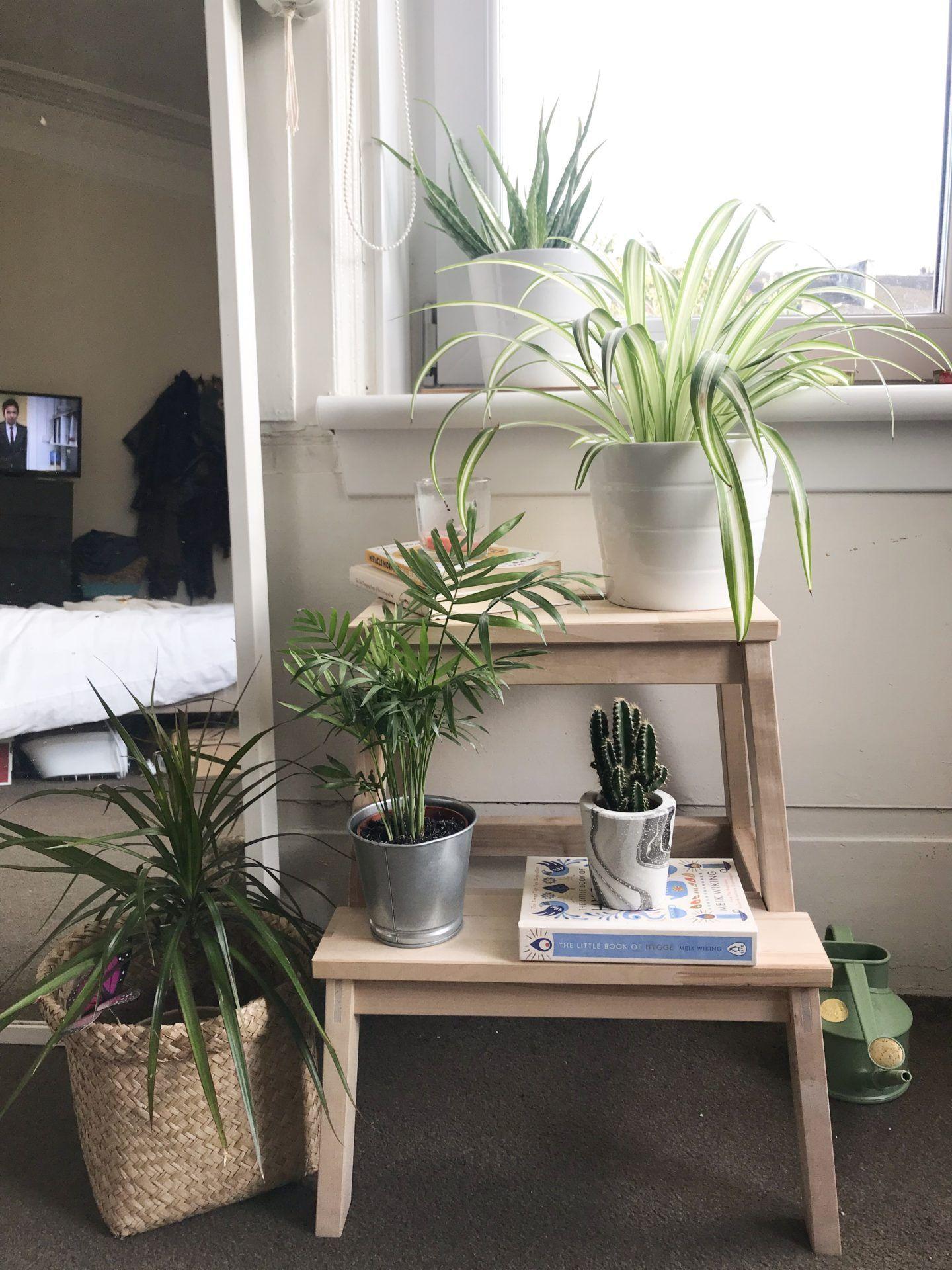 Energie Positive Plantes Depolluantes Maison Plante Verte Plantes