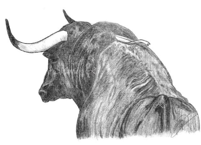 Dibujo Grafito Toro Dibujos De Toros Toros Dibujos