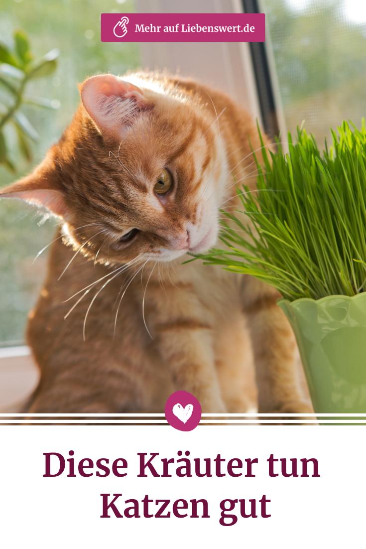 Kräuter für Katzen: Ein kleiner Garten nur für die Mieze #katze #haustiere #kräuter #garten #katzen