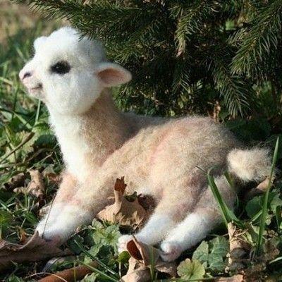 Baby alpaca...it's soooo fluffyy!!!