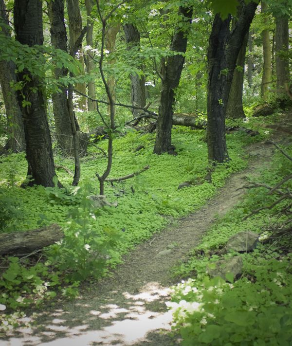 Places To Visit In Milton Canada: Visiting Eramosa Karst Conservation Area