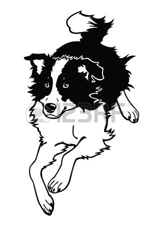 Running Dog Border Collie Black And White Vector Image Isolated On White Background Border Collie Art White Dog Images Border Collie Dog