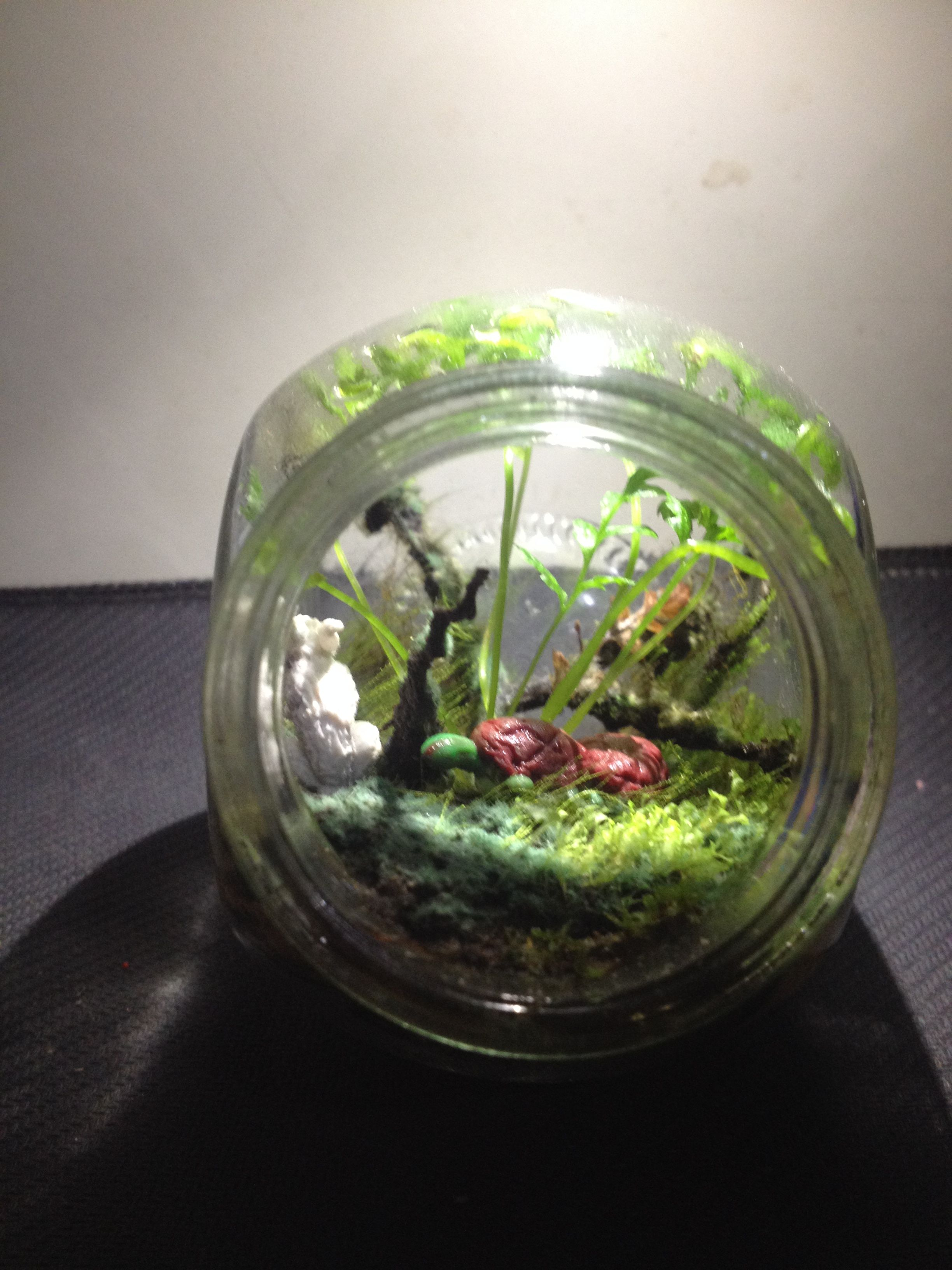 Forest terrarium with rabbit and turtle living inside create a