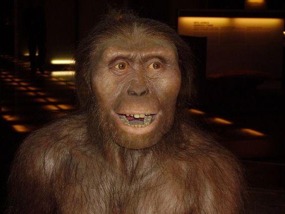 Australopithecus afarensis, human ancestor, missing link