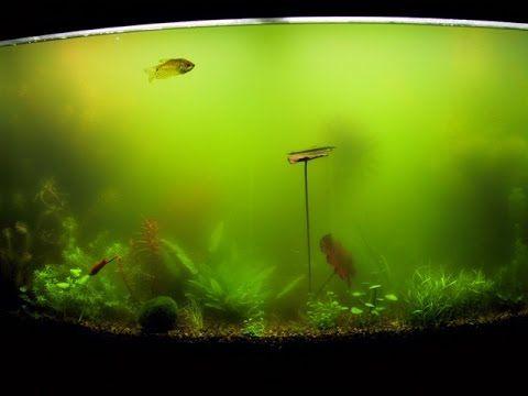 37 Super Easy Ways To Control Algae And Get Crystal Clear Water Tfcg Aquarium Algae Fish Tank Cleaning Fish Tank