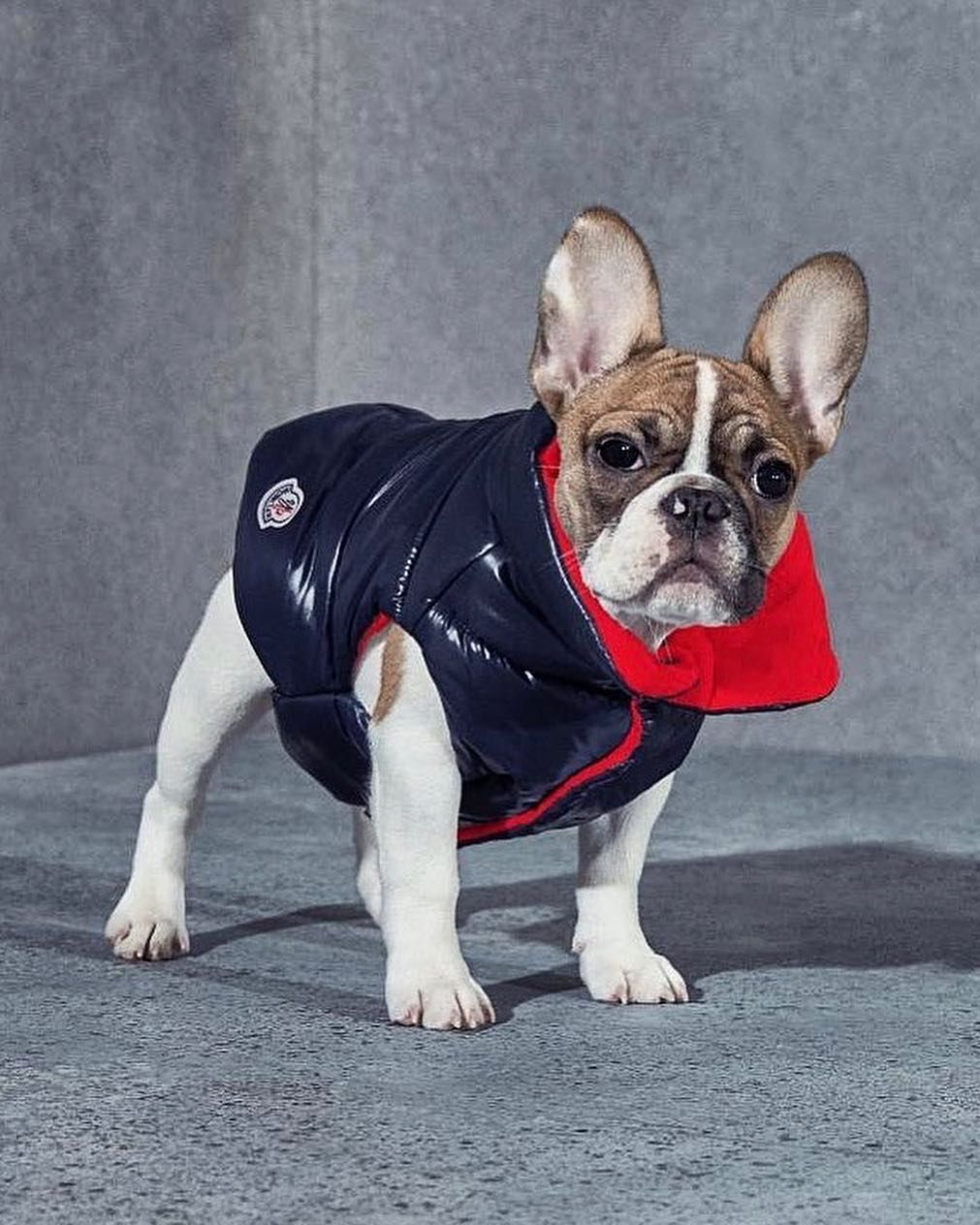 Moncler On Instagram New York Dog Lovers Prepare Your Pet For
