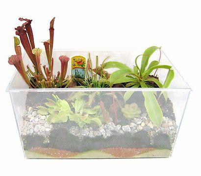 carnivoren, fleischfressende pflanzen im aquarium, 34 x 19 x 25 cm, Gartengerate ideen