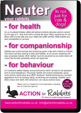 Rabbit Care Pdf