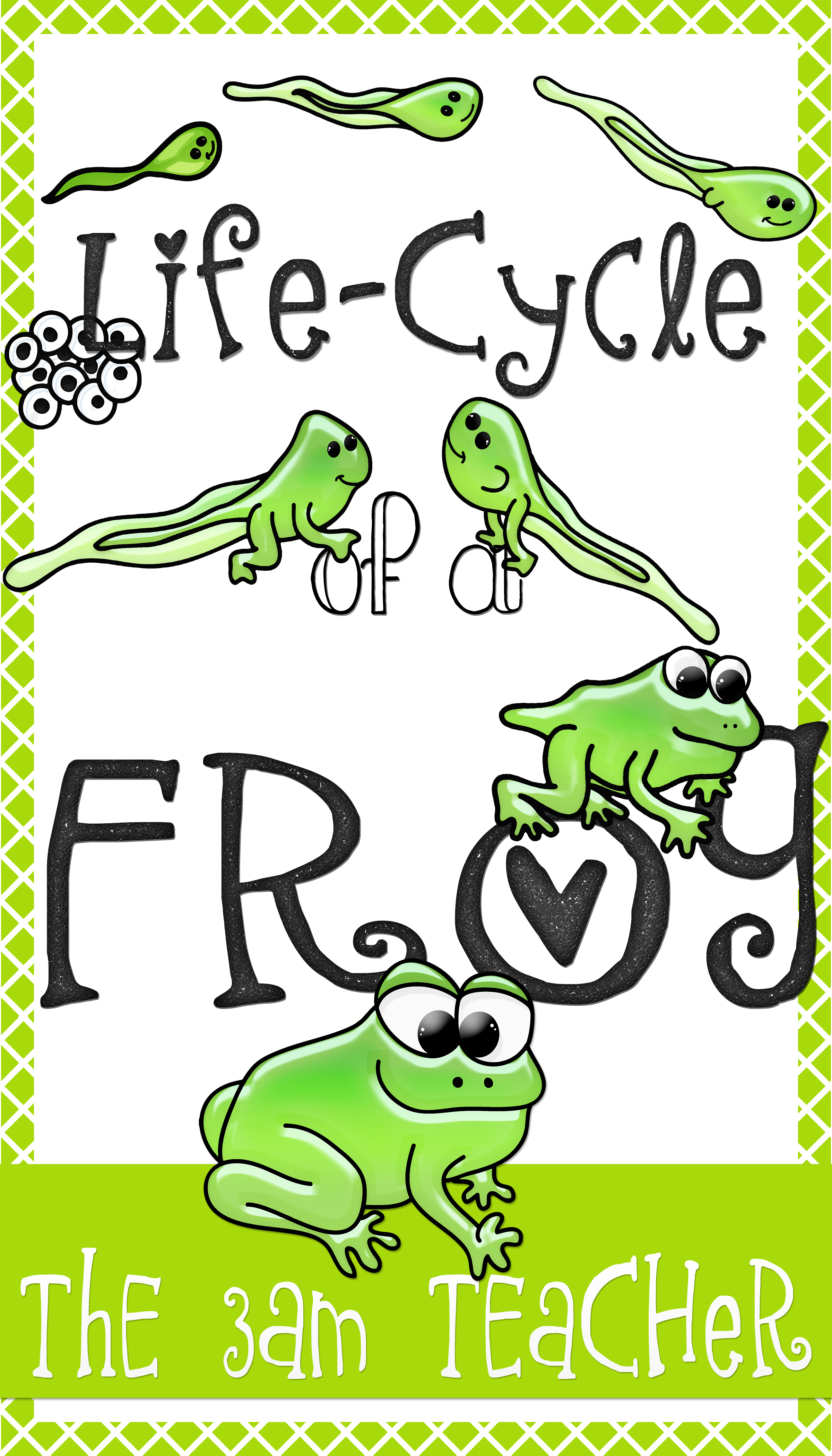 hight resolution of life cycle of a frog clipart graphics