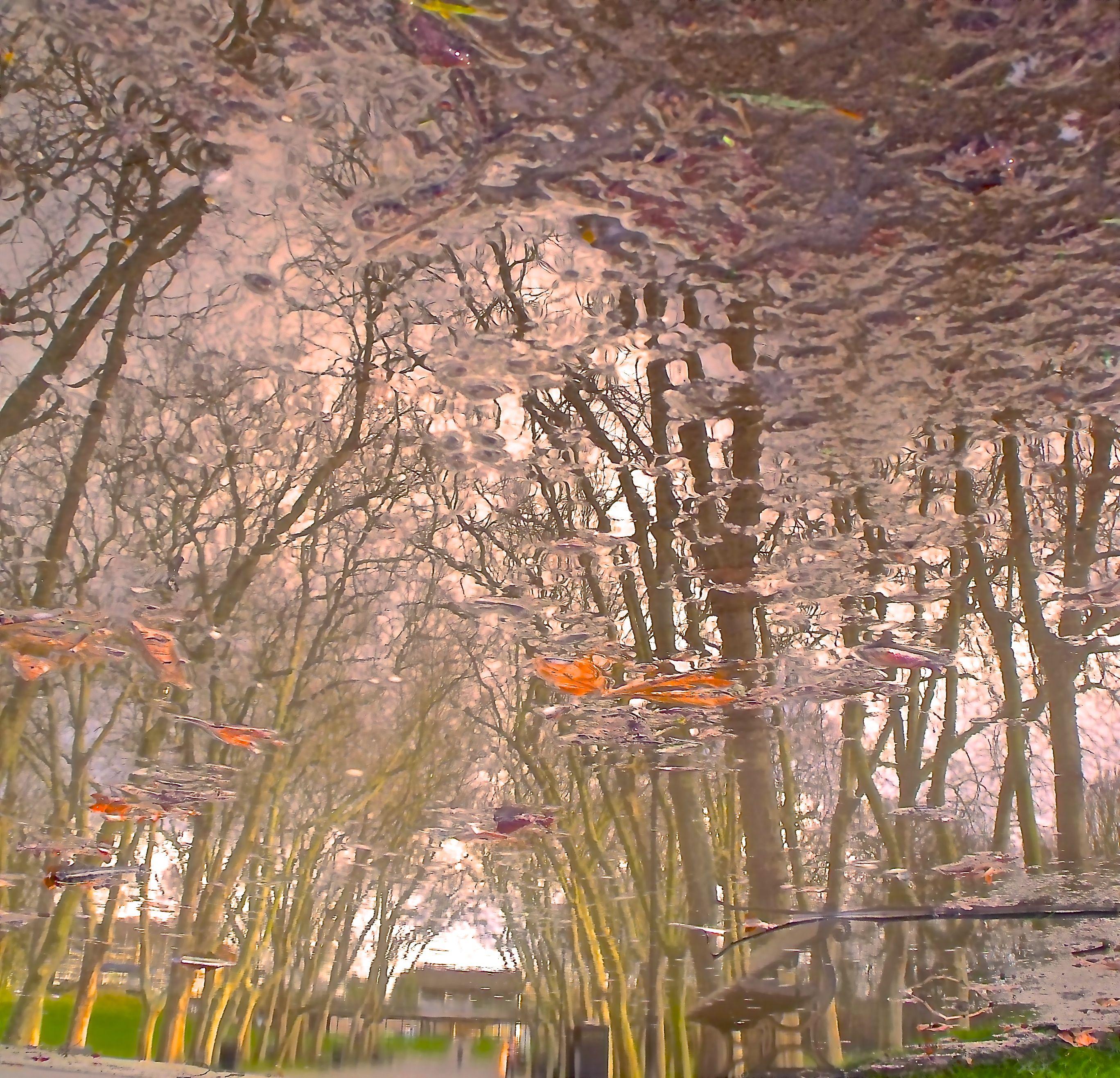Boulevard de Penge in a puddle