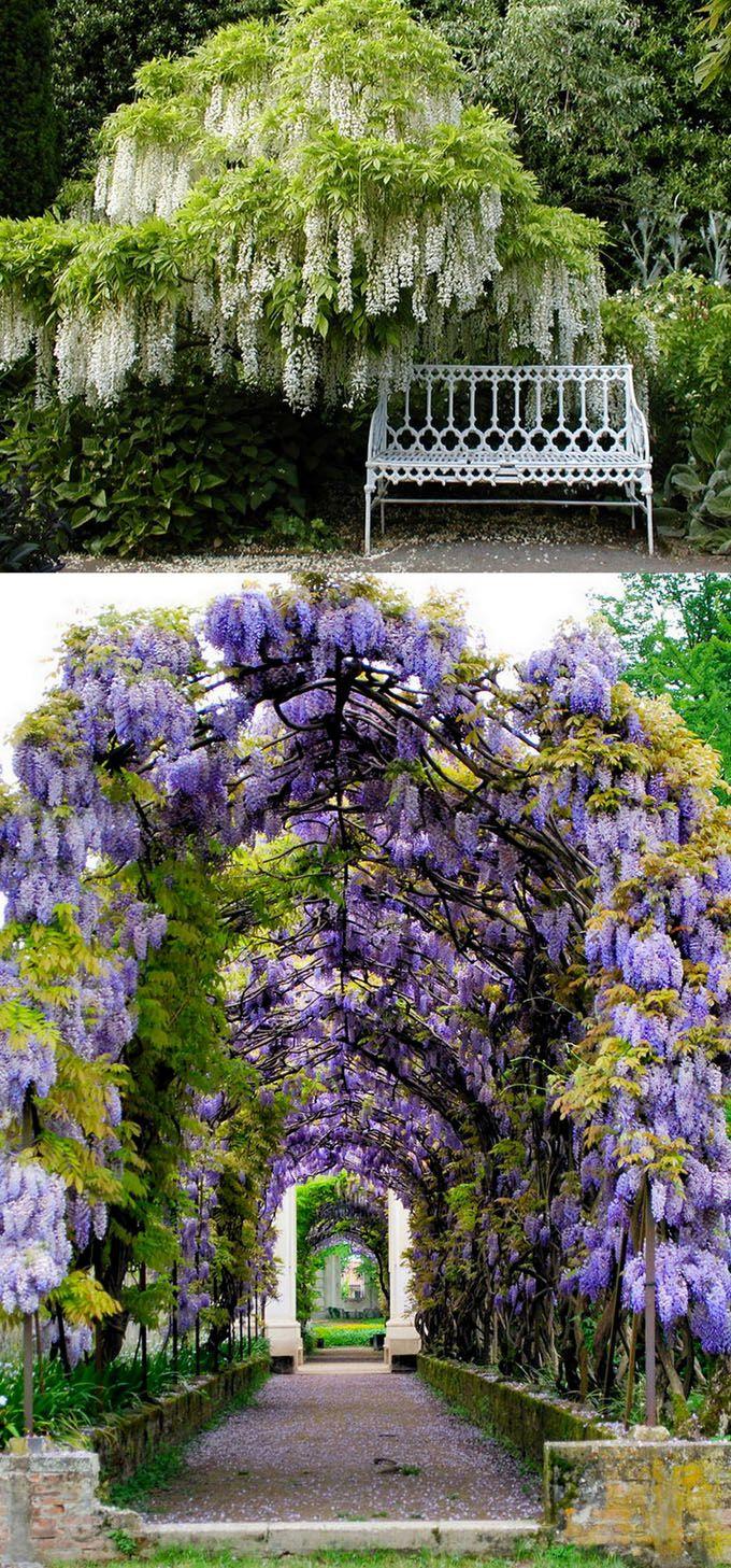 20 Favorite Flowering Vines And Climbing Plants Beautiful Gardens Dream Garden Flowering Vines