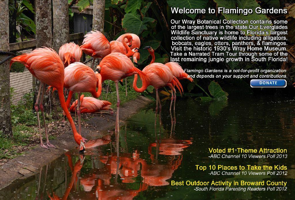 Wildlife sanctuary at the flamingo 8am to dusk FREE 3555