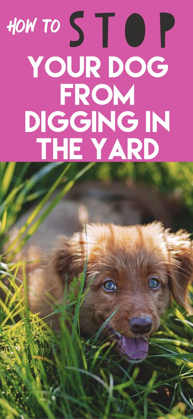 Ultimate Guide On How To Stop A Dog From Digging Puppy Biting