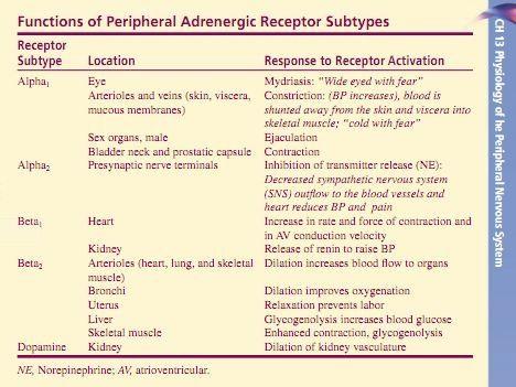 CV Pharmacology | Beta-Adrenoceptor Agonists (β-agonists)