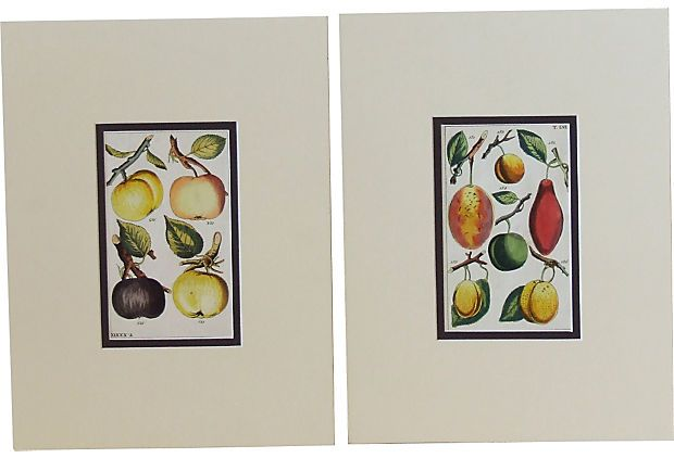 Antique    Hand-Colored Engravings, Pair on OneKingsLane.com