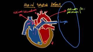 khanacademymedicine - YouTube