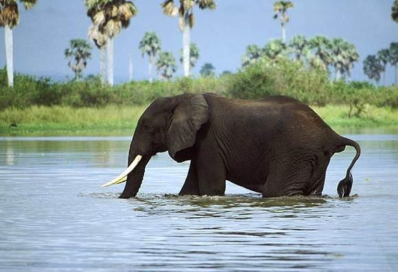 7 Best Places to See Elephants