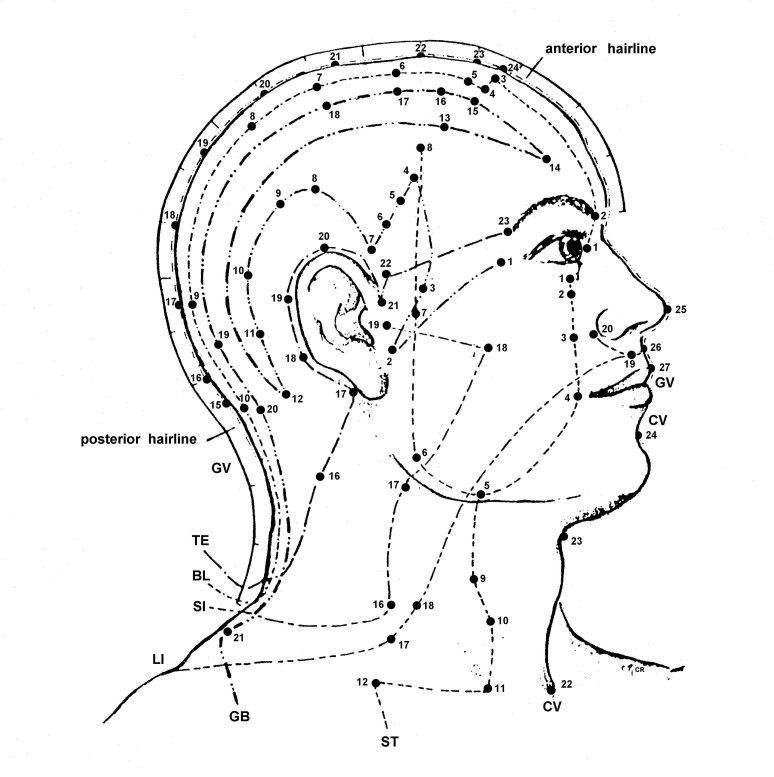Free Acupuncture Point Diagram | Acupuncture Point