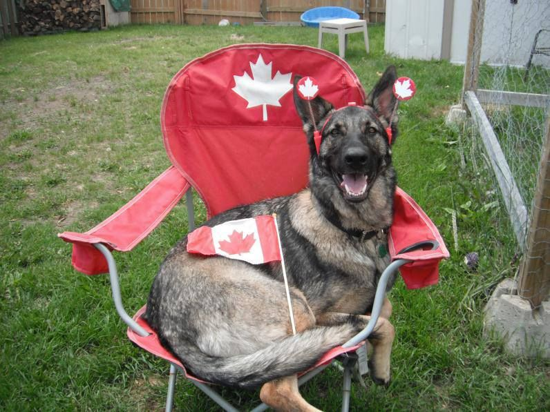 I love Canada Happy canada day, Best dogs, I am canadian