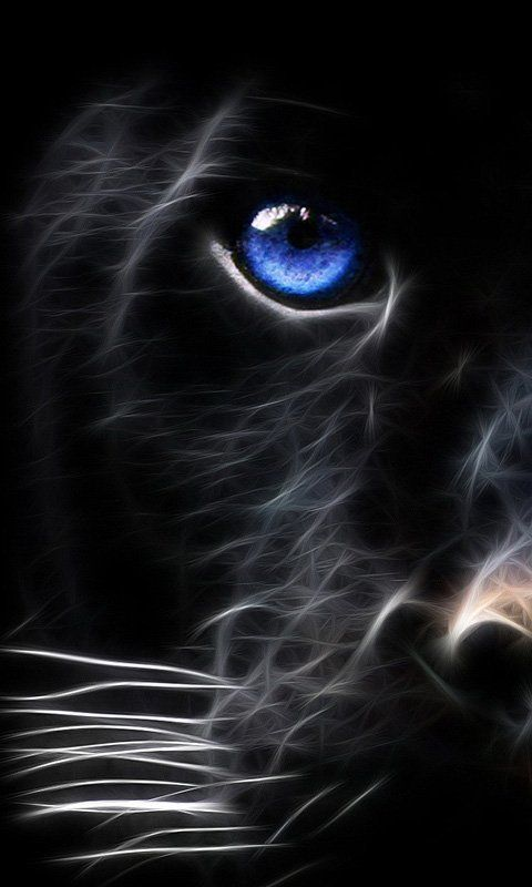 Black Tiger Mobile Phone Wallpaper