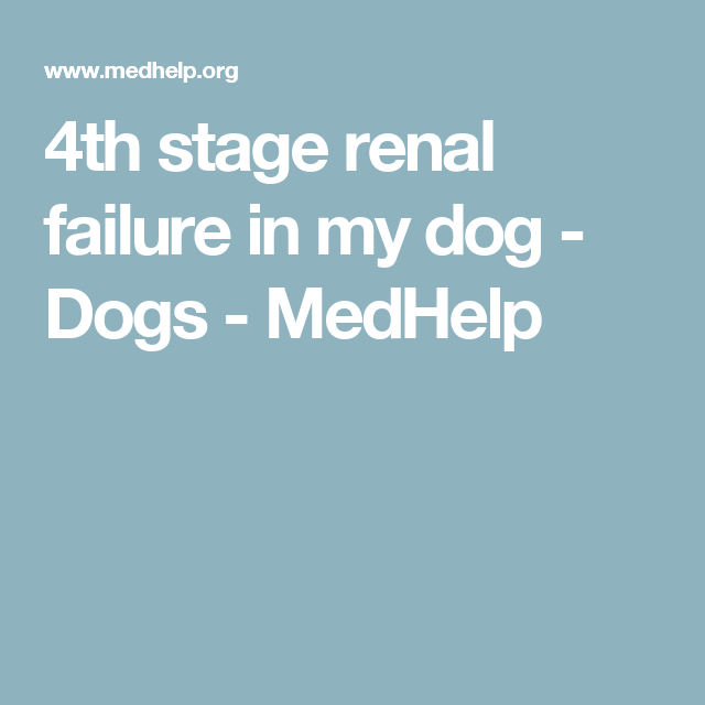 4th Stage Renal Failure In My Dog Dogs Medhelp Mickey
