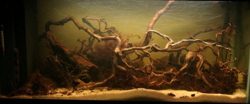 Aquarium 54L, le commencement 119a0445ad9910ad6824d561922a255b