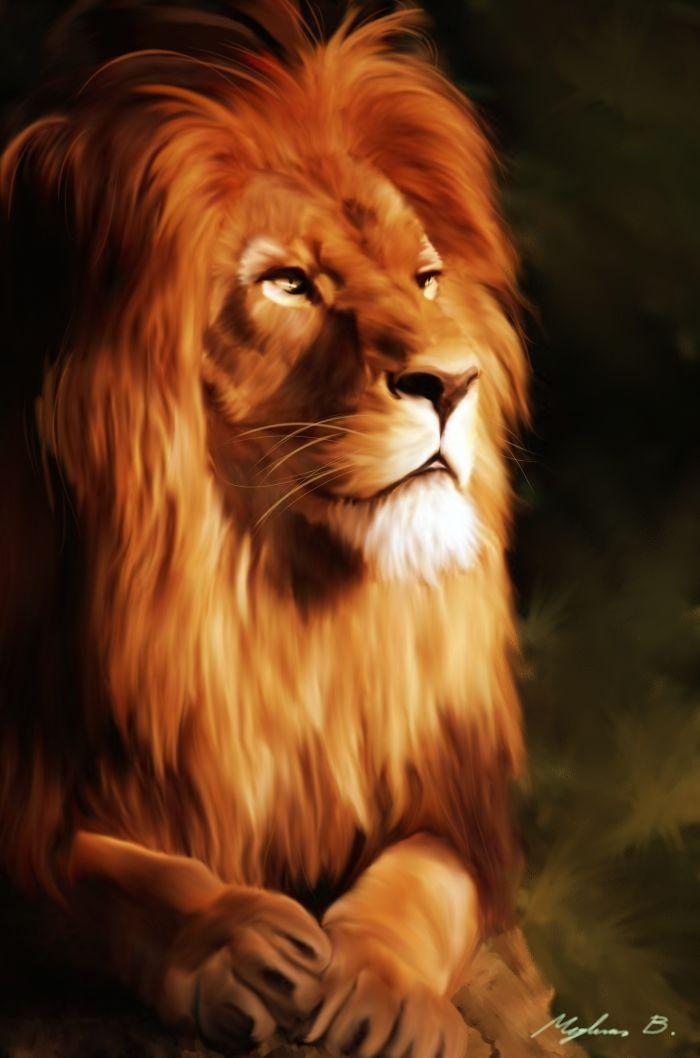 Lion By Malla13 Deviantart Com On Deviantart Lion Pictures Wild Animal Wallpaper Lion Hd Wallpaper