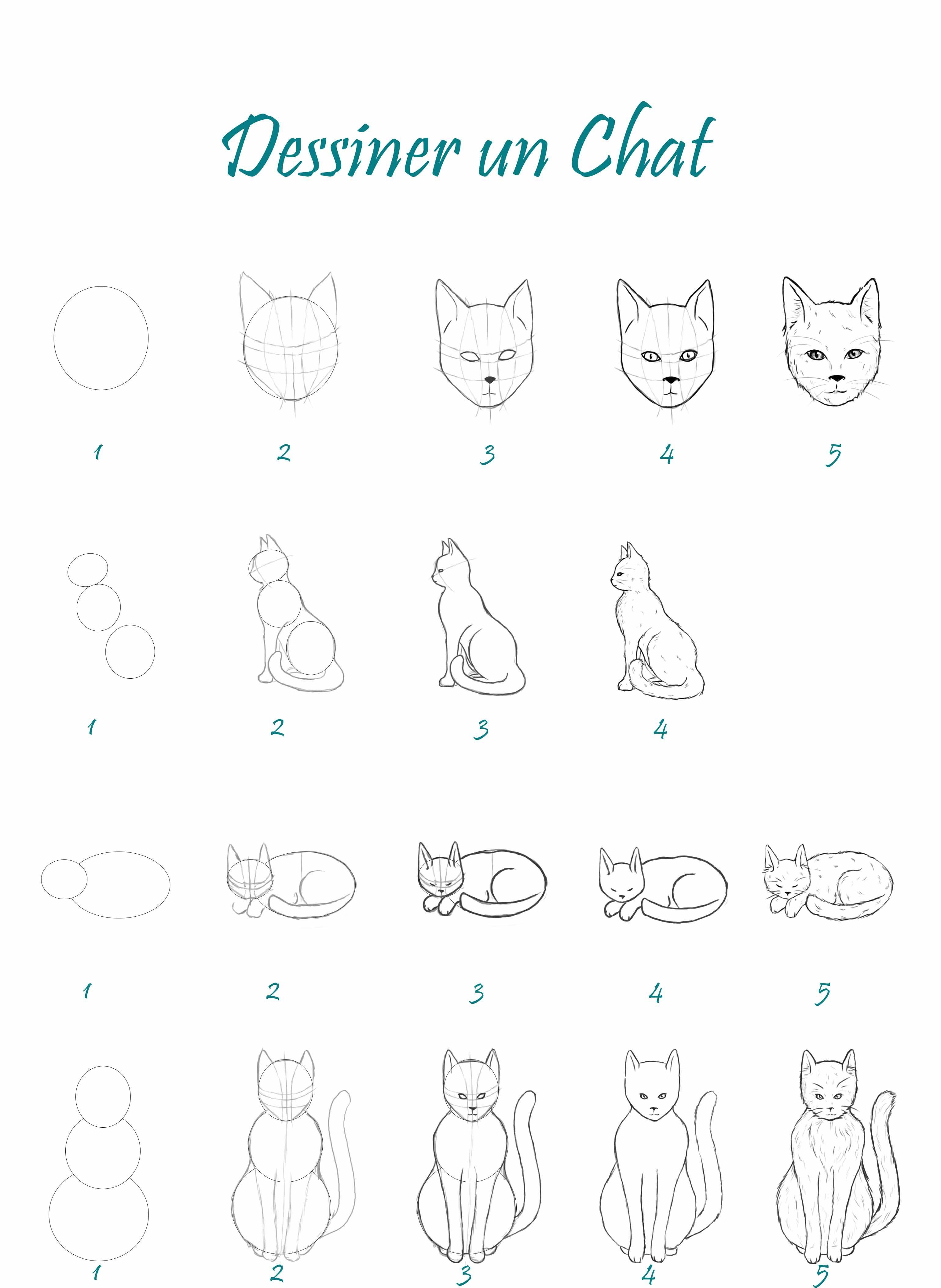 Apprendre à Dessiner Un Chat : apprendre, dessiner, Comment, Dessiner, Apprendre, Facilement, Chat,, Dessin, Facile