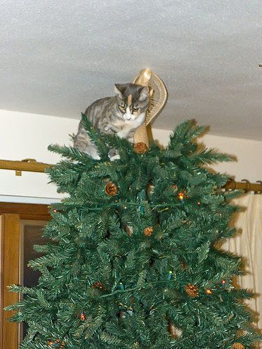 How To Cat Proof Your Christmas Tree.How To Cat Proof Your Christmas Tree A Cat Love
