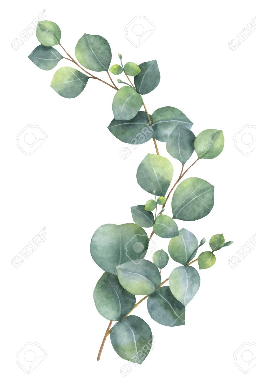 Watercolor Vector Wreath With Green Eucalyptus Leaves And Branches Painting Leaves Acrylic Watercolor Flower Background Leaf Photography