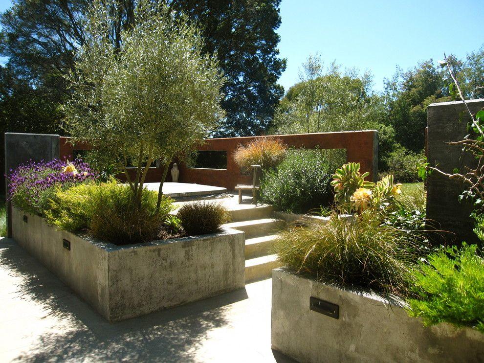 Raised patio ideas patio rustic with planting design olive tree ...