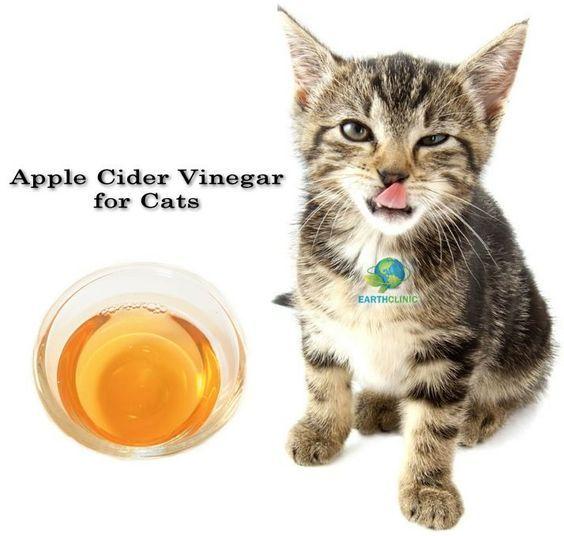 Apple Cider Vinegar for Cats Cat health, Cat fleas, Flea