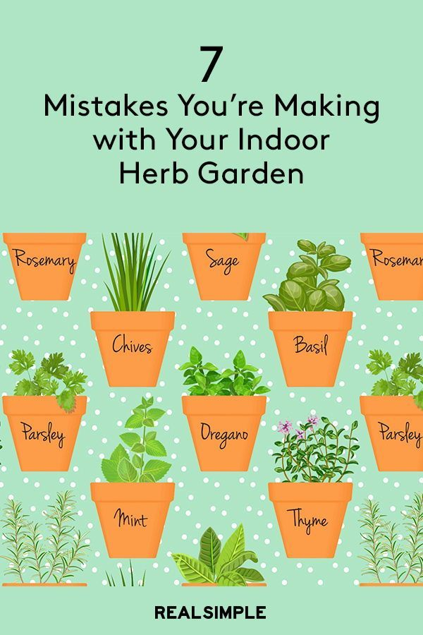 Photo of 7 Mistakes You're Making With Your Indoor Herb Garden