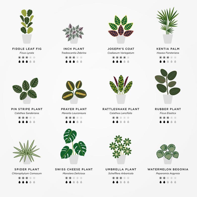 House plants poster  House plant print  Houseplants  Plant | Etsy