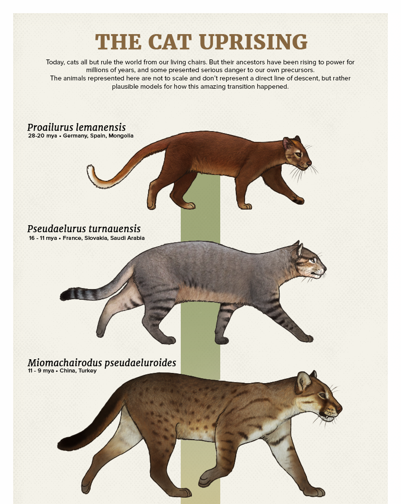 The Casual Paleoartist • Evolution Series The Cat