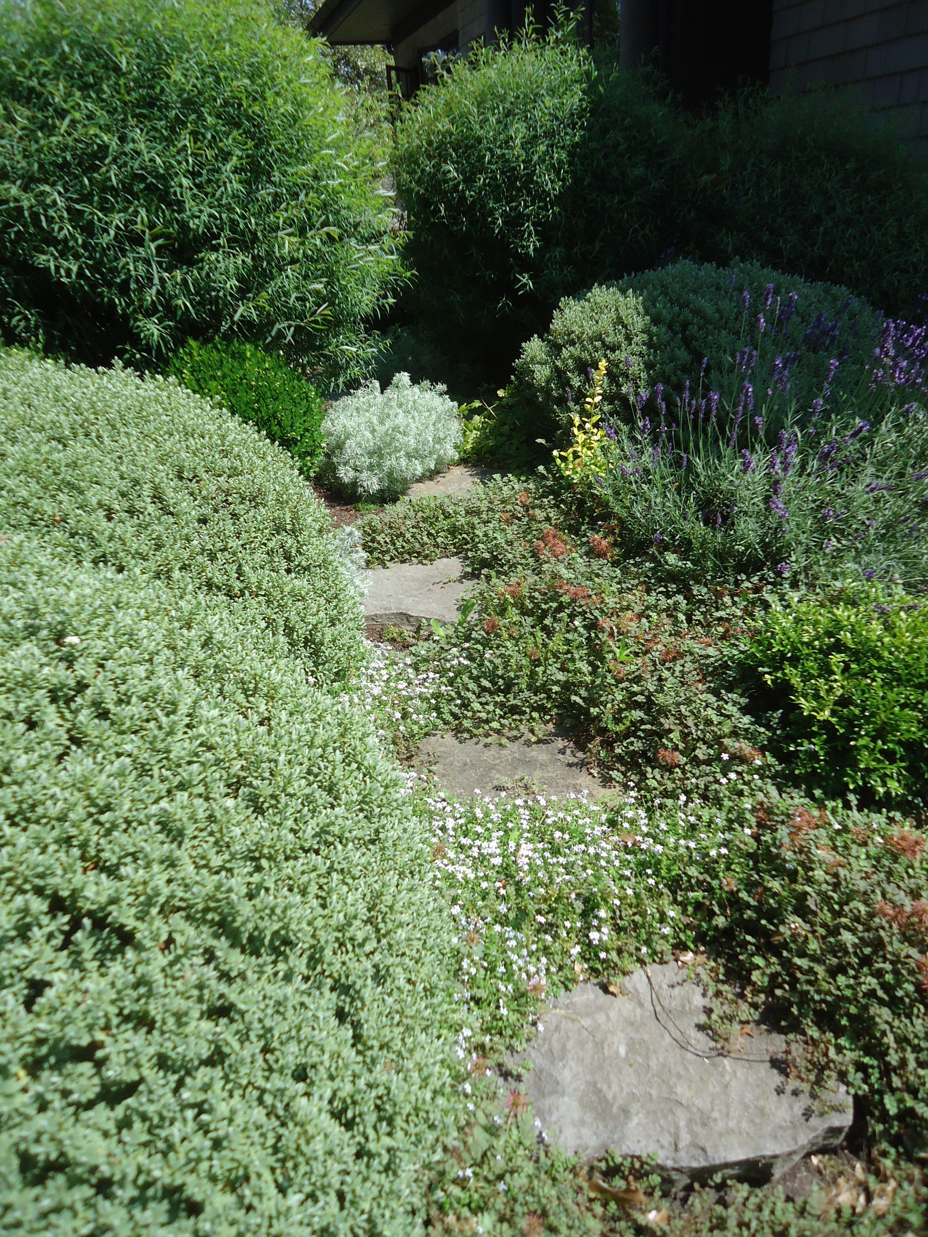 Thomas Hobbs Garden • https://thatbloomingarden.files.wordpress.com/2015/07/dsc08902.jpg