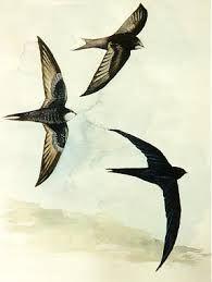 Resultado de imagem para andorinhas para bordar