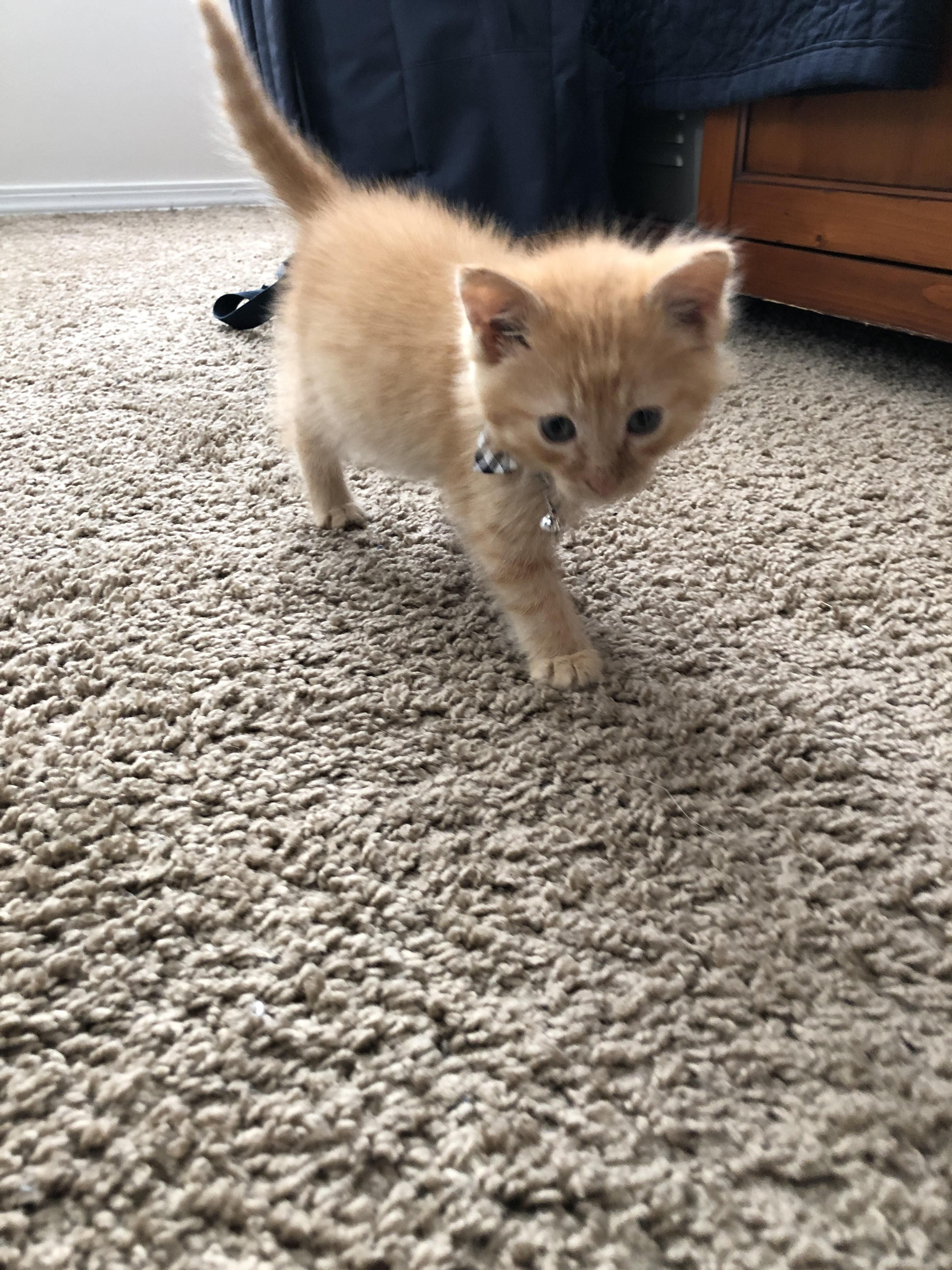 Newest Addition To The Family I Rescued This Little Kitty His Name Is Yam Cute Cats And Dogs Funny Cats And Dogs Kittens And Puppies