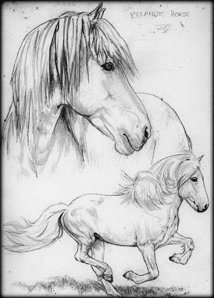 Icelandic Horse Sketch Horse Sketch Icelandic Horse Animal Caricature